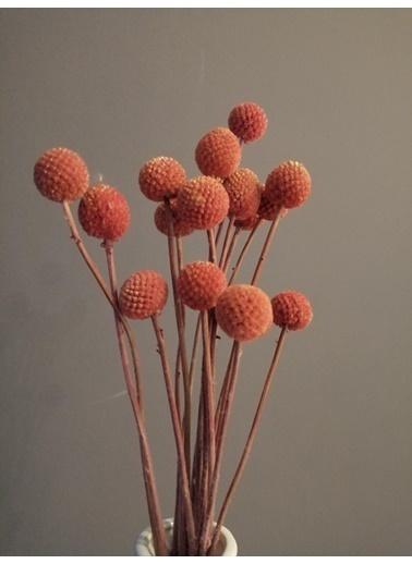 Kuru Çiçek Deposu Turuncu 20 Adet Crespedia Kuru Çiçek Oranj